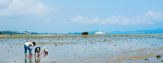 沖縄で潮干狩りを楽しもう!