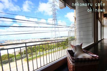 猫まるカフェ okinawa
