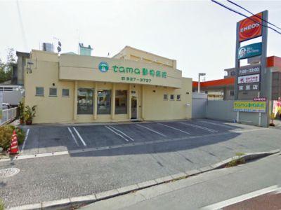 tama動物病院